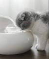 Comederos y Bebederos para gatos